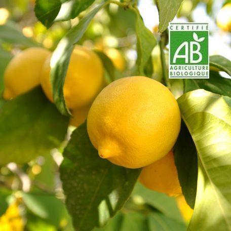 Citrons-bio AMAP BIODEVANT